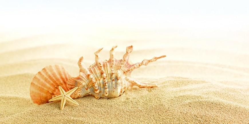 Offerta Speciale Giugno Praia a Mare