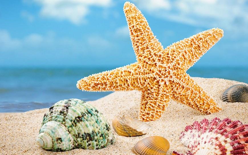 Offerta Speciale Giugno Praia a Mare 2019